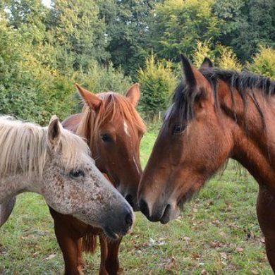 léčení-těžkých-časů-psychoterapie-pomocí-koní.jpg